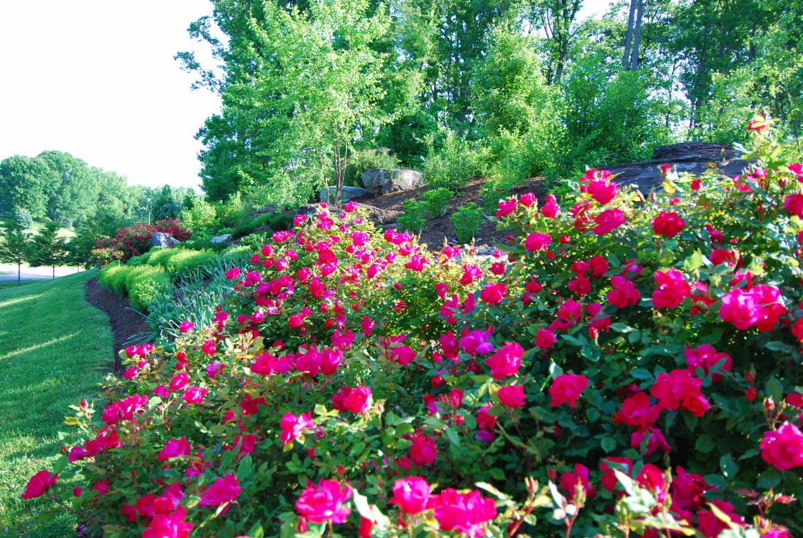 Landscaping Garden Design Pictures in Annapolis, MD
