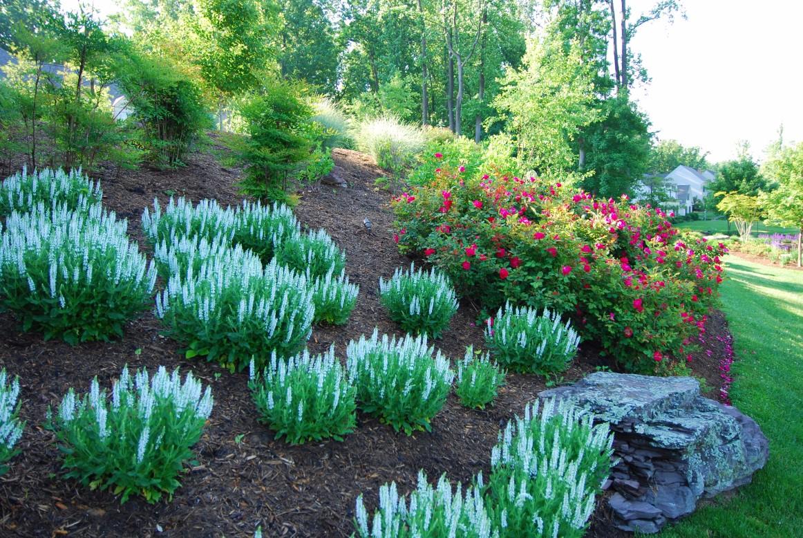 Landscape Designer Portfolio in Washington, DC