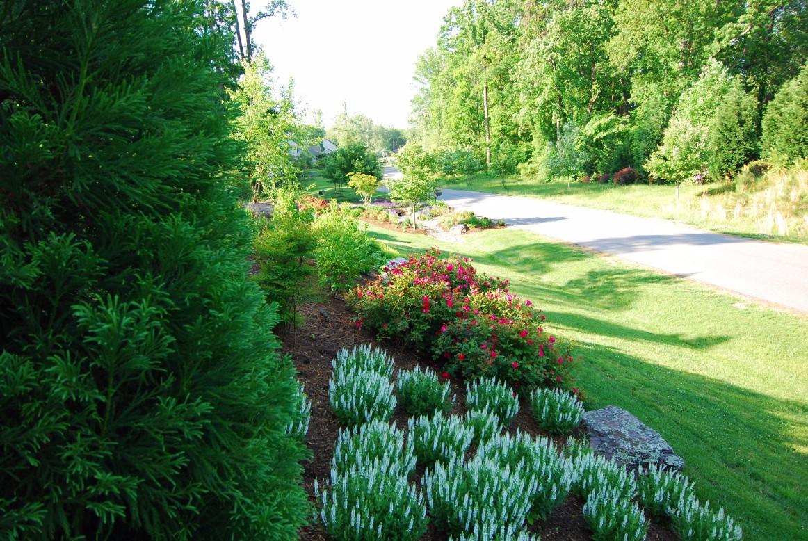 Landscape Design Pictures in McLean, VA