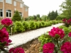 walkway and flowers landscape