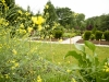 lawn care washington dc