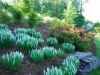 Landscape Designer Portfolio in Washington, DC