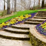 Tips to Help Control Erosion in Your Yard