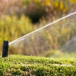 Water-Saving Strategies for Lawn Care