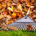 Recycle Fallen Leaves in Your Garden This Fall