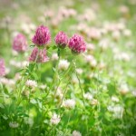 Low-Maintenance Ground Cover Alternatives to Grass