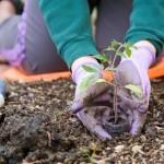 Preparing Your Soil for Spring Gardening