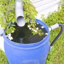 Water-Saving Strategies for Your Lawn and Garden