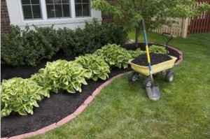 landscaping in DC