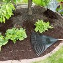 Tips for Landscaping in the Spring