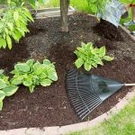 Spring Landscaping Tips