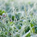 Tips for Winterizing Your Landscaping Plants