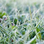 Landscape Winterizing Tips