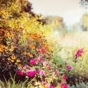 Your Checklist for Fall Perennial Care