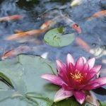 Pond Landscape Design & Construction in Annapolis, MD