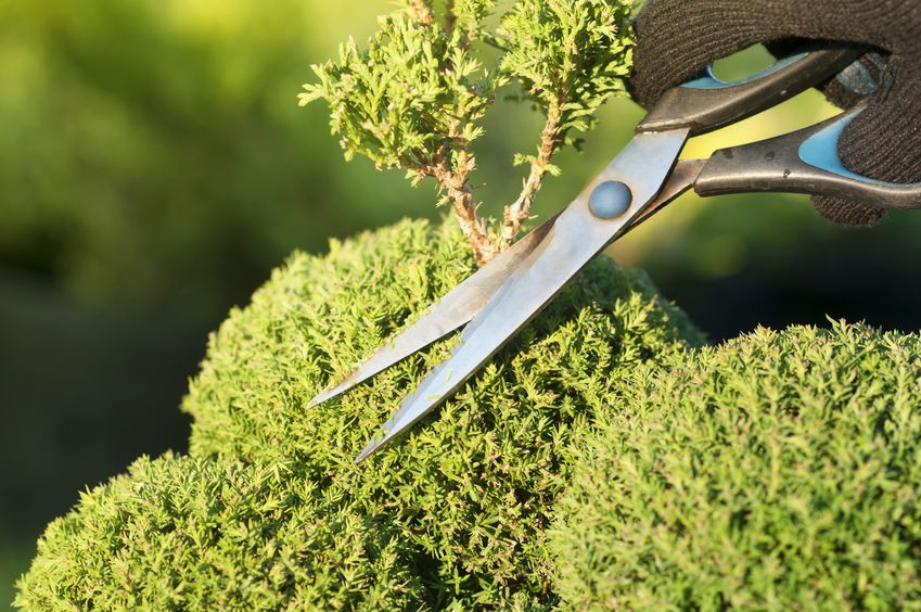 Seasonal Landscaping Services in Annapolis, MD