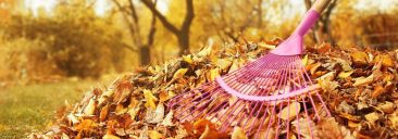 Leaf Removal Hacks to Make Fall Easier on You and Your Lawn