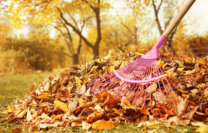 Leaf Removal Services in Annapolis, MD