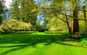 Tree Planting Services in Annapolis, MD